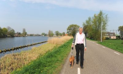 Picking the Right Dog Walker