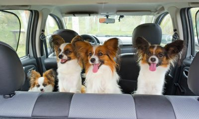 The Benefits of Using a Pet Sitting Service In Manhattan