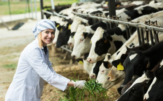 A Few Things to Check for When Purchasing Your First Dairy Cow